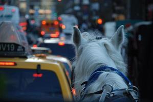 carruagem do cavalo no tráfego de manhattan foto