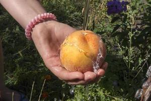 mão com pêssego suculento fresco sob fluxo de água. foto