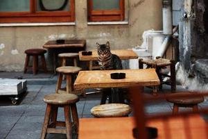 gato em istambul foto