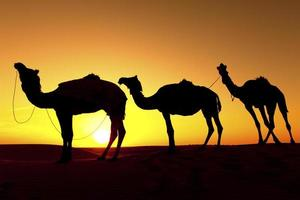 silhueta de trem camelo foto