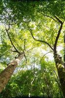 floresta foto