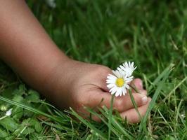 criança flor foto