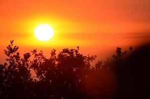 pôr do sol sobre galhos foto