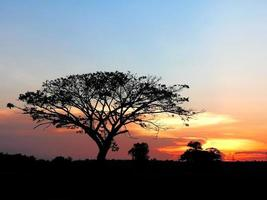 árvore no pôr do sol foto