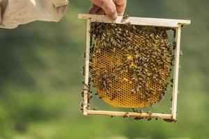 apicultor foto