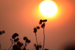 pôr do sol e grama foto