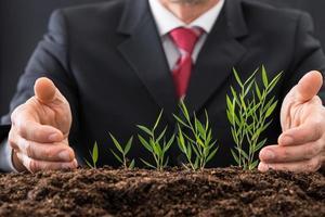 plantas de proteção do empresário