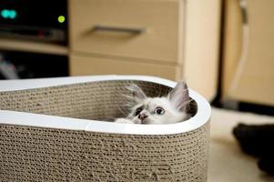 gato escondido foto