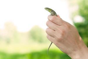 o lagarto na mão foto