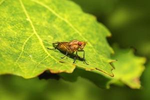 retrato de uma mosca foto