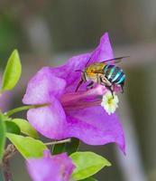 inseto voando para flor foto