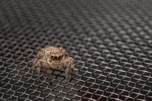 aranha na tela de arame de mosquito foto