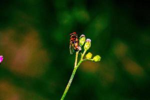 mosca planta foto