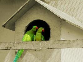 pássaro da paixão foto