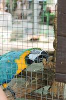papagaio arara estão de pé no galho foto