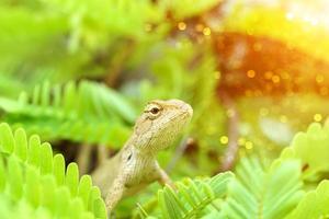 camaleão marrom na árvore foto