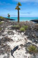 vista para o mar de galápagos foto