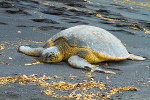 tartarugas marinhas verdes foto