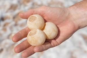 mão de homem segurando ovo de tartaruga foto