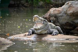 crocodilo indiano foto