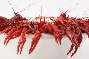 lagostas cozidas foto