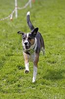 cachorro correndo foto