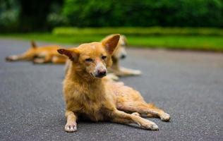 cães na rua foto