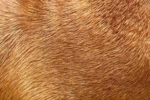 pele de cachorro foto