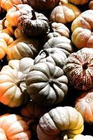 pilha de milho doce abóboras coloridas