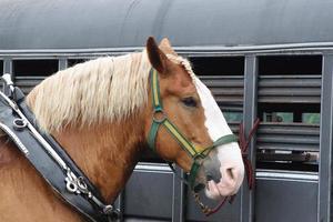 cavalo e reboque foto
