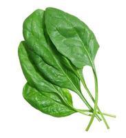 folhas de espinafre no fundo branco foto