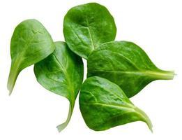 folhas de salada de espinafre isolado foto