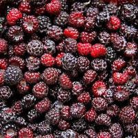 grande coleção de framboesas frescas boné preto foto