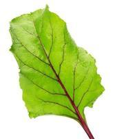 folha de beterraba isolada no fundo branco foto