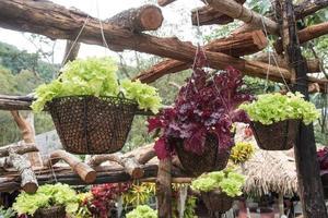 vegetais orgânicos frescos crescendo na cesta foto