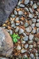 pedra e cascalho foto