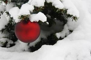 árvore de Natal foto
