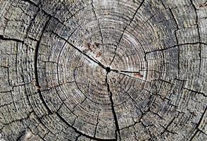 anéis de árvores