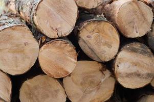 troncos de árvores foto
