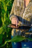 engenheiro agrônomo com computador tablet no campo de milho foto