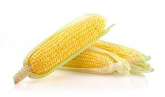 espiga de milho fresca foto