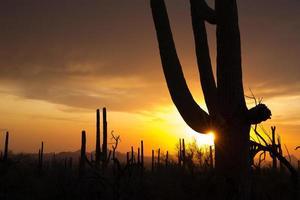 pôr do sol sobre o saguaro np foto
