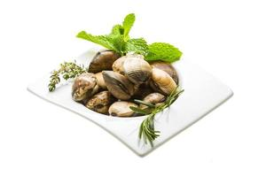 molusco espanhol - almeja
