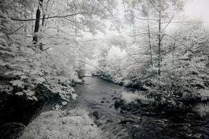 rio lento foto