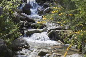 pequeno rio pulando foto