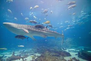 país das maravilhas subaquático