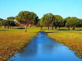 curso de água no parque foto