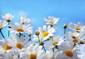 flores do verão