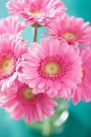 lindo buquê de flores gerbera rosa em vaso foto
