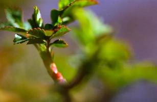 Primavera! foto